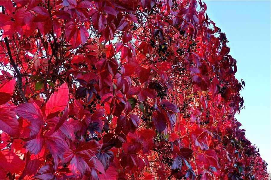 Il existe une variété de plantes et vitamines pour aider la circulation sanguine